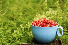 Fresh strawberries in a blue plastic Cup on a green background. Fresh strawberries in a blue plastic Cup on green background stock image