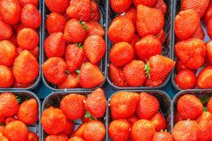 Fresh strawberries ready for sale at dutch vegatable market Royalty Free Stock Photos