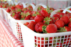 Fresh Strawberries. A bunch of fresh organic strawberries in baskets Royalty Free Stock Images