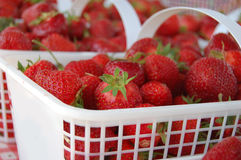 Fresh Strawberries Royalty Free Stock Image