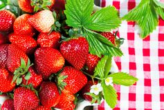 Fresh strawberries on a checkered tablecloth royalty free stock photo