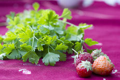 Fresh strawberries and cilantro Royalty Free Stock Images