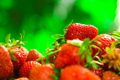 Fresh strawberries closeup on the blurry background Stock Photography