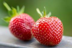 Fresh Strawberries (1) Royalty Free Stock Photo