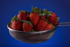 Fresh strawberries in a colander on a blue background Stock Photo