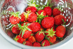 Fresh strawberries in a colander Royalty Free Stock Photography