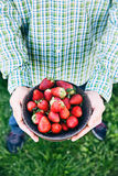 Fresh strawberries and farmer Royalty Free Stock Image