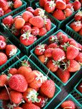 Fresh Strawberries. Freshly-picked strawberries in rows of quart baskets stock photos