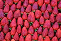 Fresh strawberries fruit background Royalty Free Stock Image