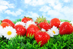 Fresh strawberries on grass Royalty Free Stock Photo