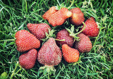 Fresh strawberries on the grass Royalty Free Stock Photos