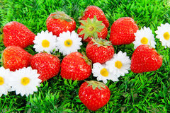Fresh strawberries on grass and flowers Stock Images
