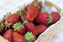 Fresh strawberries with green tails wickerwork basket. With white napkin stock images