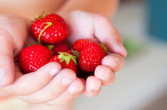 Fresh strawberries in the hands of a child Royalty Free Stock Photo