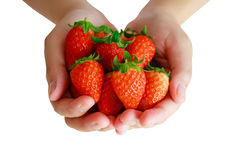 Fresh strawberries in hands  on white Stock Photo