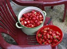 Fresh strawberries for jam preparation. Fresh strawberries in a pot and in a bowl for jam preparation Royalty Free Stock Image