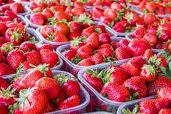 Fresh strawberries from Kisač, Serbia royalty free stock image