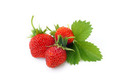Fresh strawberries with leaves Stock Photos