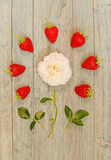 Fresh strawberries lined around a white rose Royalty Free Stock Photo