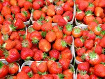 Fresh strawberries macro. Fresh strawberries grown on Indian garden farm Bridgewater Lunenburg County Nova Scotia Canada royalty free stock images