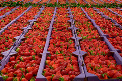 Fresh Strawberries at a Market Stock Photos