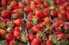 Fresh strawberries on market Royalty Free Stock Photo