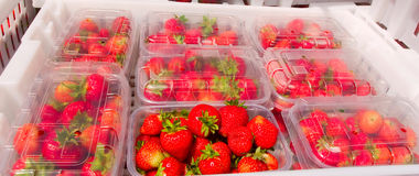 Fresh Strawberries on Market Stall. Boxes of freshly picked summer strawberries displayed at market fruit stand Royalty Free Stock Image