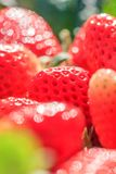 Fresh Strawberries with morning dew in natural backgrounds, look like a jewel. Beautiful bokeh with glittering. Organic farm. Close up. Selective focus royalty free stock photography
