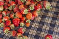 Fresh strawberries. In phetchaboon thailand Royalty Free Stock Photo