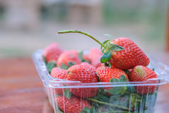 Fresh strawberries in plastic box Royalty Free Stock Photography