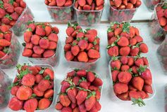 Fresh strawberries in plastic boxes at the city market. Fresh strawberries in plastic boxes at the city farmers market royalty free stock photos