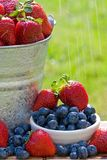 Fresh Strawberries in the Rain. A bucket of fresh strawberries and blueberries in the morning rain get wet with dew Stock Photography