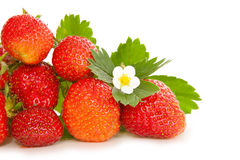Fresh strawberries . Royalty Free Stock Images