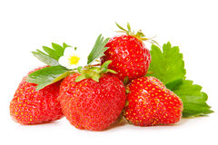 Fresh strawberries . Royalty Free Stock Image