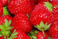 Fresh strawberries. Ripe and fresh strawberries red Royalty Free Stock Photos