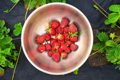 Fresh strawberries in rustic iron bowl. Stock Photography