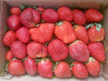 Fresh strawberries for sale Royalty Free Stock Photos