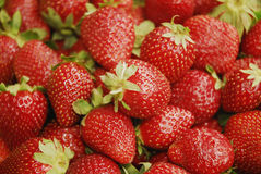 Fresh strawberries - strawberry. Fresh and delicious strawberries - strawberry Royalty Free Stock Image