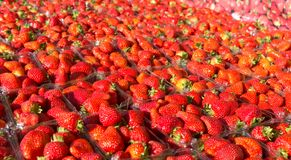 Fresh Strawberries. Fresh strawberry background at a local farmers market Royalty Free Stock Photo