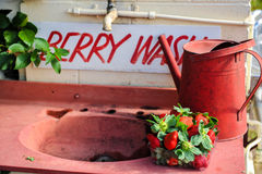 Fresh strawberries in a tray on a sink Royalty Free Stock Photos