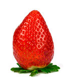 Fresh strawberries were placed on a white background Stock Images