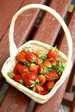 Fresh strawberries in white basket on the old bench Royalty Free Stock Photos