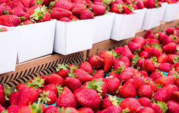 Fresh strawberries. White cardboard boxes filled with fresh strawberries at a farmers market in San Francisco royalty free stock photo