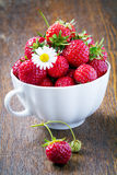 Fresh strawberries in a white cup Stock Photos