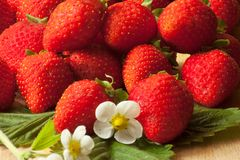 Fresh strawberries with white spring flower. Fresh red strawberries with leaves and flowers Royalty Free Stock Photography