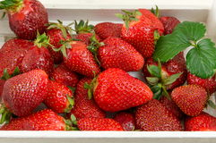 Fresh strawberries in a white wooden box Royalty Free Stock Photo