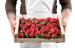 Strawberries in box Stock Images