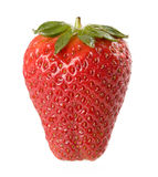 Fresh strawberry. Fresh sweet strawberry isolated on a white plain background royalty free stock image