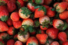 Fresh strawberry. Fresh red strawberry, food background Royalty Free Stock Image