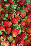 Fresh strawberry. Photo shows a freshly plucked strawberries, which lies next to each other Stock Photos
